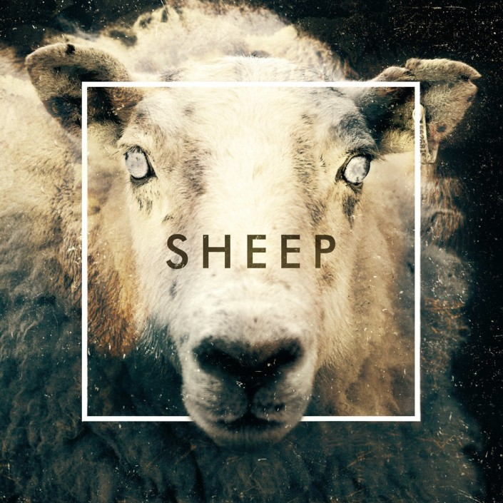 Sheep by The Human Animal; Part of The USA Project